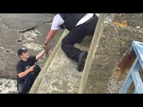 Baby Bunny Rescue in Douglas Harbour 17.06.15
