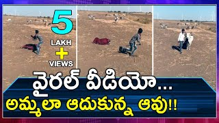 Viral Video : Watch How A Cow Saved The Owner | Oneindia Telugu