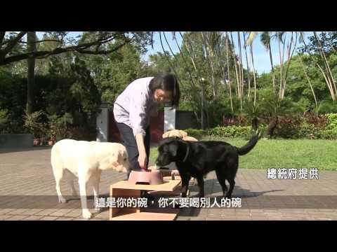 總統官邸曝光!蔡英文和狗家人的生活放閃