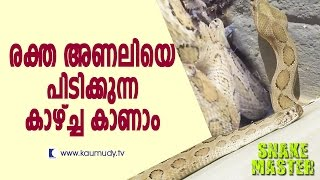 Vava Suresh Caught a Brown Tree Snake & Russell's Viper | Snake Master  | Kaumudy TV