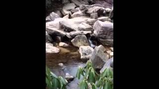 Blue Ridge cascade Thumbnail