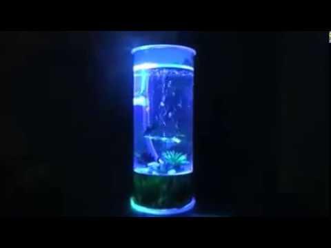 Cara Memelihara Ikan Cupang Di Led Aquarium Youtube