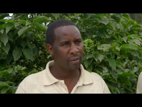 Shamba Shape Up Sn 07 - Ep 7 Kieneyeji Chicken, Dairy Cows, Coffee Fertilisers (English)