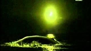 Нападение гигантской акулы на кита.