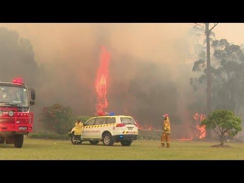 GRAPHIC content: Hundreds of koalas perish in Australian bushfire
