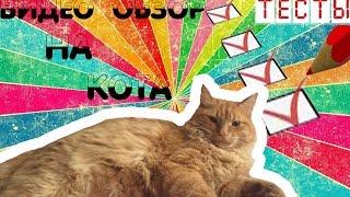 ✔ Видео Обзор Кота   Video Review of the Cat 2015 (HD) ✔