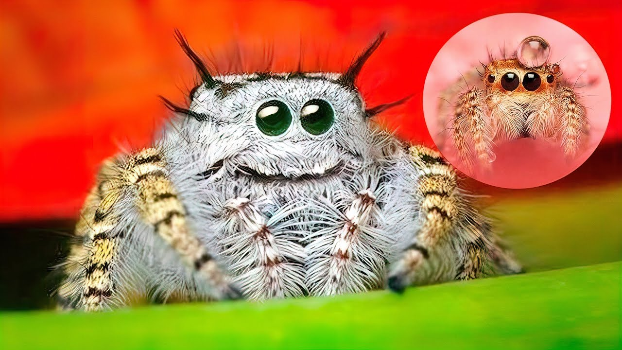 cutest spiders spider cute