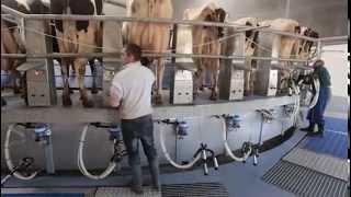 Exclusif  nous sommes entrés dans la ferme des 1000 vaches