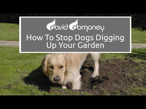 how-to-stop-dogs-digging-up-your-garden-#garden-#gardening-#daviddomoney