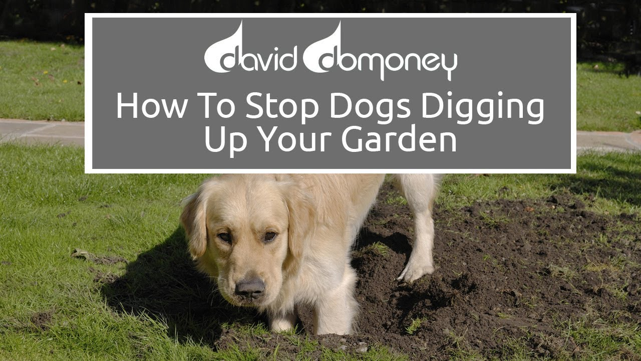 How To Stop Dogs Digging Up Your Garden