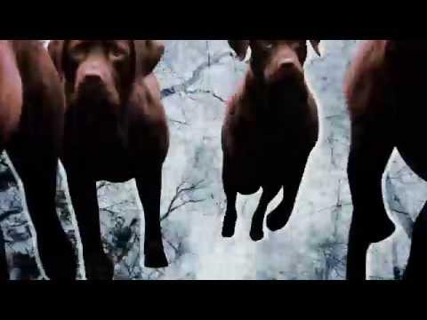 Mo Kolours - Little Brown Dog