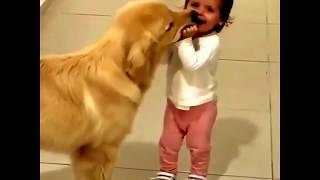 Смешные собаки | Подборка видео приколов про собак