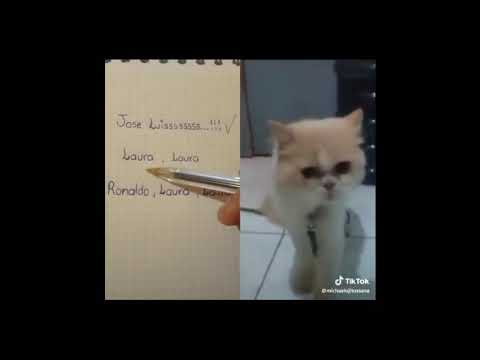 Jerry el gato que habla from YouTube · Duration:  2 minutes 44 seconds