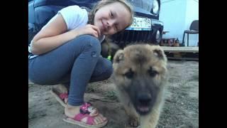 В память о любимой собаке Ёсе!