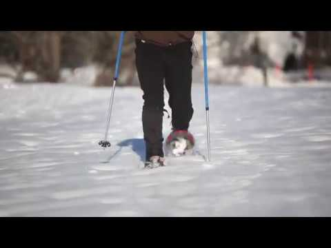 How-to-Snowshoe: Learn the basics from the experts | L.L.Bean