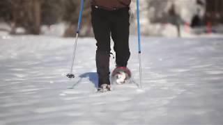 How-to-Snowshoe: Learn the basics from the experts at L.L.Bean