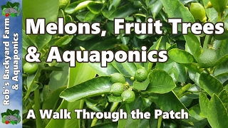 Melons, Fruit Trees & Aquaponics - Backyard Farm & Aquaponic Update