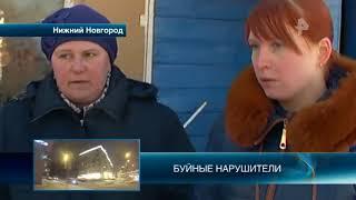 В Нижнем Новгороде зоозащитники спасли собаку, хозяйка которой морила ее голодом