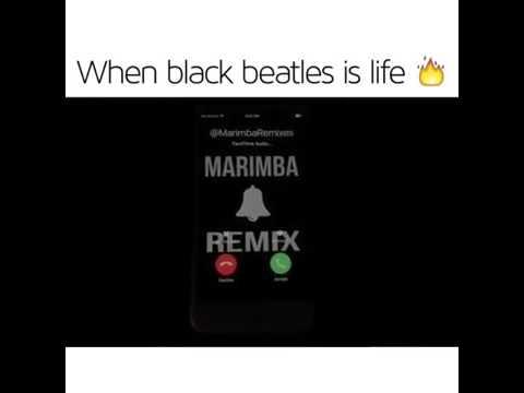 Black beatles _marimba ringtone remix