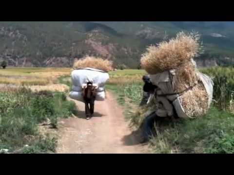 15 Seconds in China - Wheat Harvest