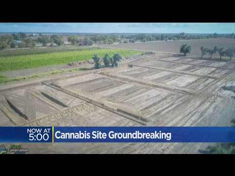 Massive Marijuana Greenhouse Under Construction In Yolo County