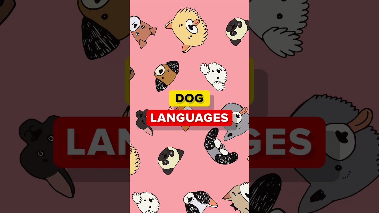 How Do Dogs Sound in Different Languages
