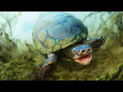 Arvinachelys goldeni - the pig-snouted turtle