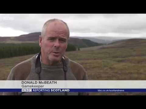 """""""Bird activists"""" killing golden eagles & hen harriers, says gamekeeper"""
