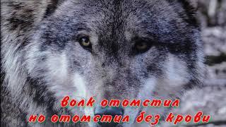 короткие рассказы  волк