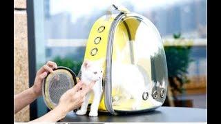 Прозрачный рюкзак переноска для кошек и собак