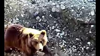 Медведь нашел рабочих в своем лесу.