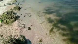 видео Курорты Азовского моря под микроскопом