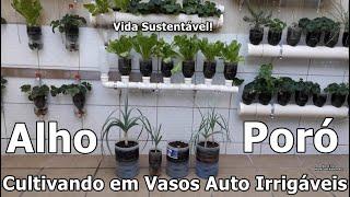 Como Plantar Alho Poró da Maneira Mais Fácil Que Existe Em Vasos Auto Irrigáveis