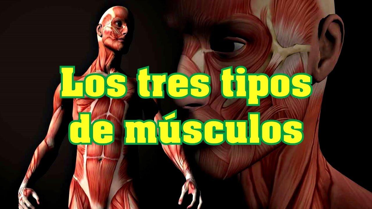 Los tres tipos de músculos - YouTube
