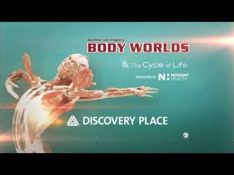 BODY WORLDS Now Open at Discovery Place in Charlotte