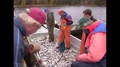 Hoitokalastus syysnuottauksella
