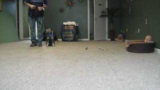 Columbus Ohio Dog Training:  Client Testimonial - Master Obedience Trainer