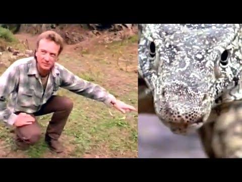 "Megalania"" Giant Goanna Sighting - YouTube"