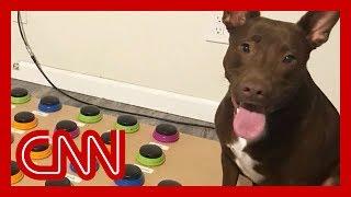 A speech pathologist taught her dog Stella to 'speak'