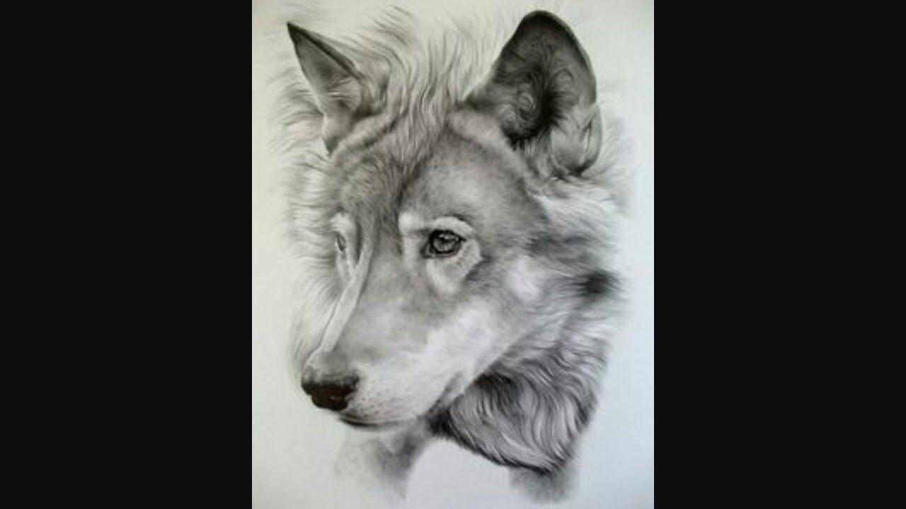 The best drawing in the whole world