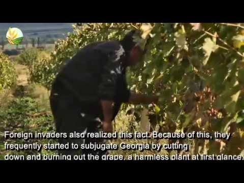 Georgia!!! Country Of Wine .. Tradition and culture ( Agriculture TV )
