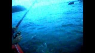 Catching a shark    Ловля акулы на удочку(Catching a bronze whale shark in Tauranga (New Zealand)., 2013-02-23T04:43:39.000Z)