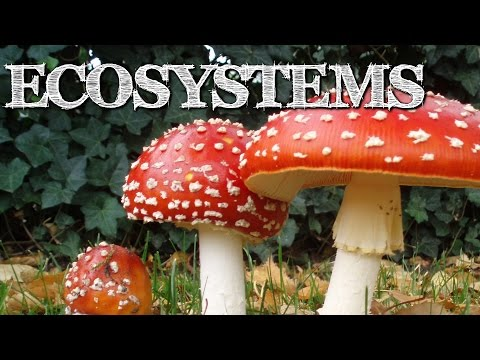Understanding Ecosystems for Kids: Producers, Consumers, Dec