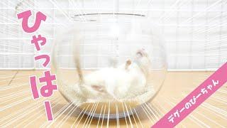 デグーの斬新すぎる砂浴びが可愛すぎて癒やされる!Funny and Cute Degu