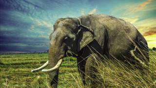 ♥► 6 Beautiful Elephant Wallpaper Images / Best Free Elephant Screensaver Pictures ◄♥