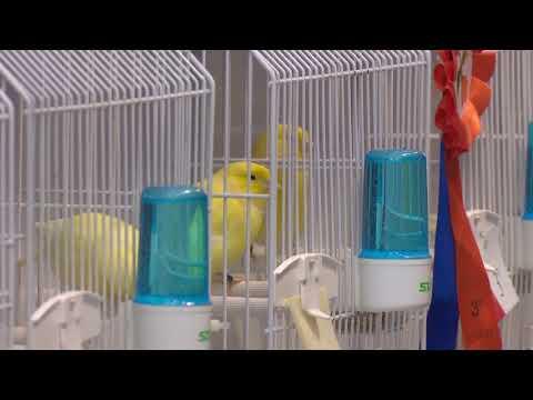 Viti i dytë i organizimit të festivalit të zogjve   ABC News Albania