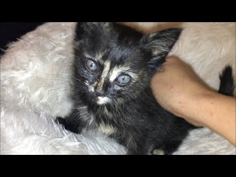 Neighborhood Kids Bring Me A Starving Kitten - #30 - Feral Cat Family Socialization