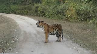 Kanha National Park; Kanha Tiger Reserve India Part 4 of India and Sri Lanka Trip