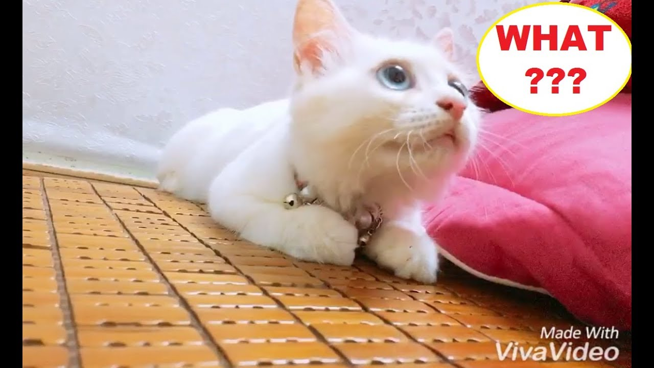 Cute Dog And Cat Doing Funny Things New Funny Video Compilation