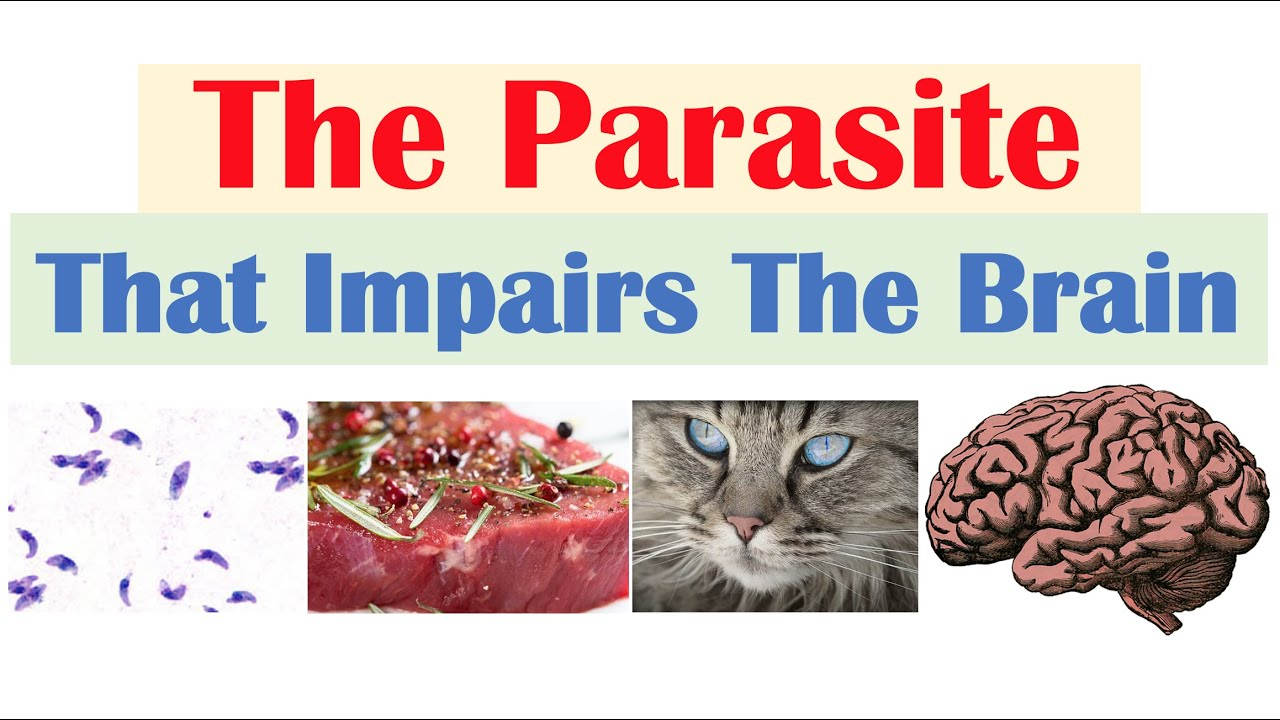 Toxoplasmosis & Cognitive Functioning (Decreased Processing Speed, Working Memory and More)